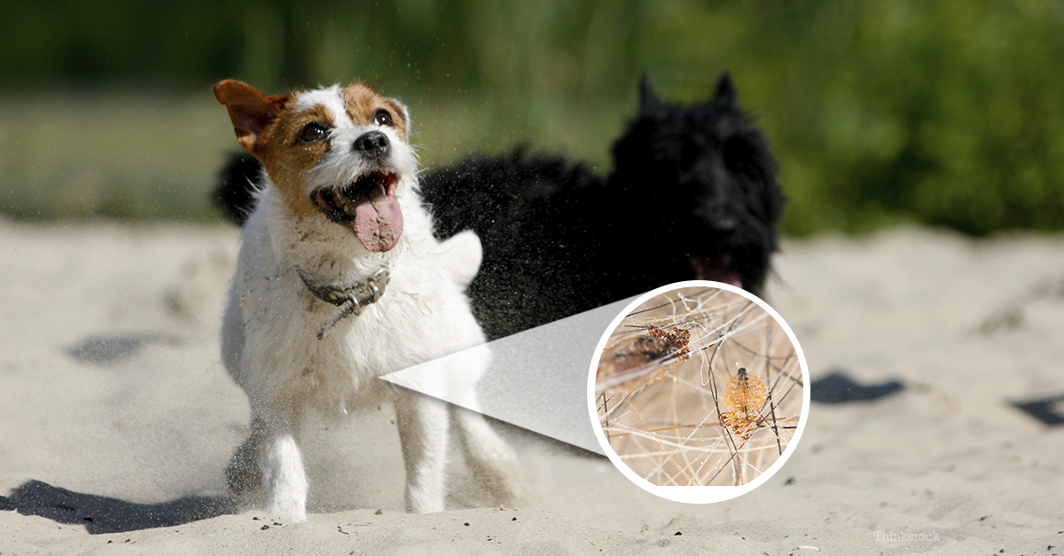 how to get rid of lice on dogs