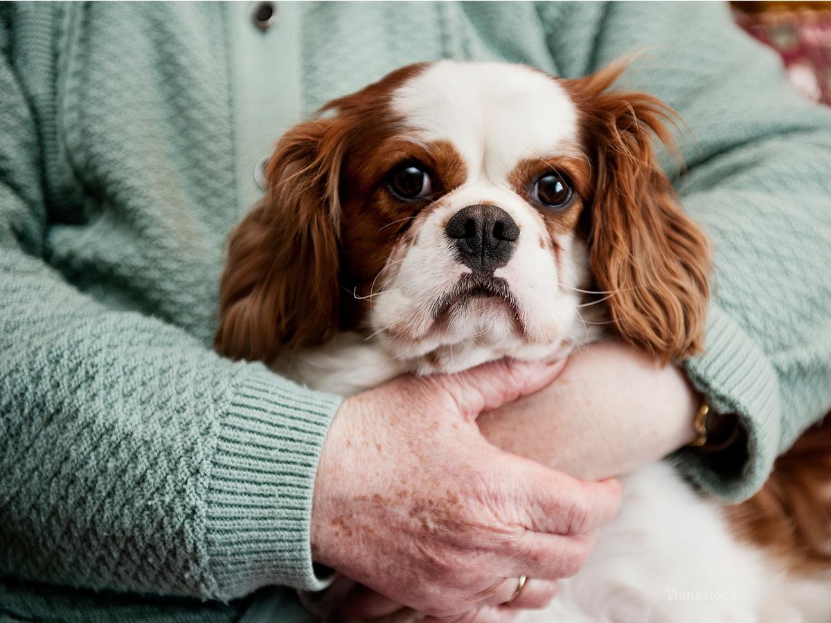 Canine Lipomas Noncancerous Tumors