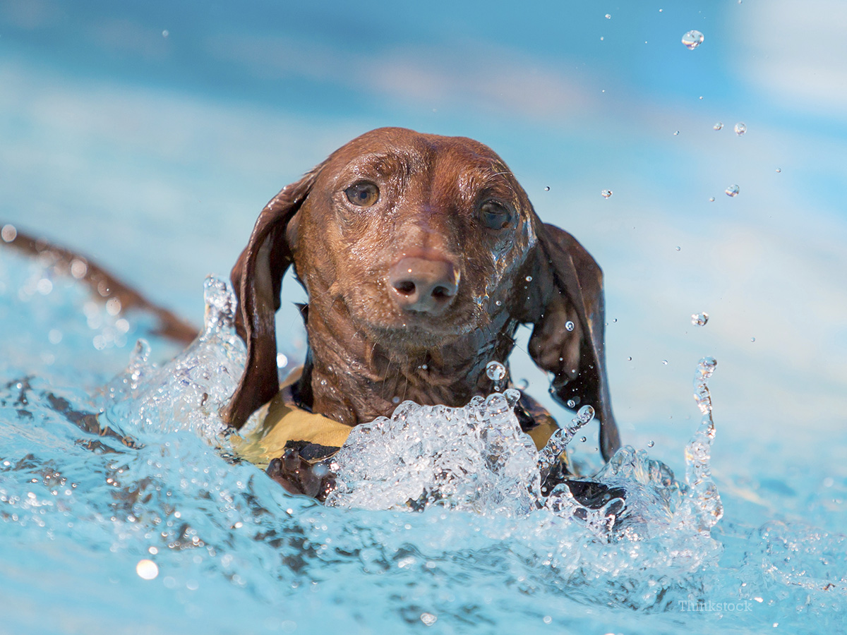 Our top 10 summer safety tips dogs 2 468956999