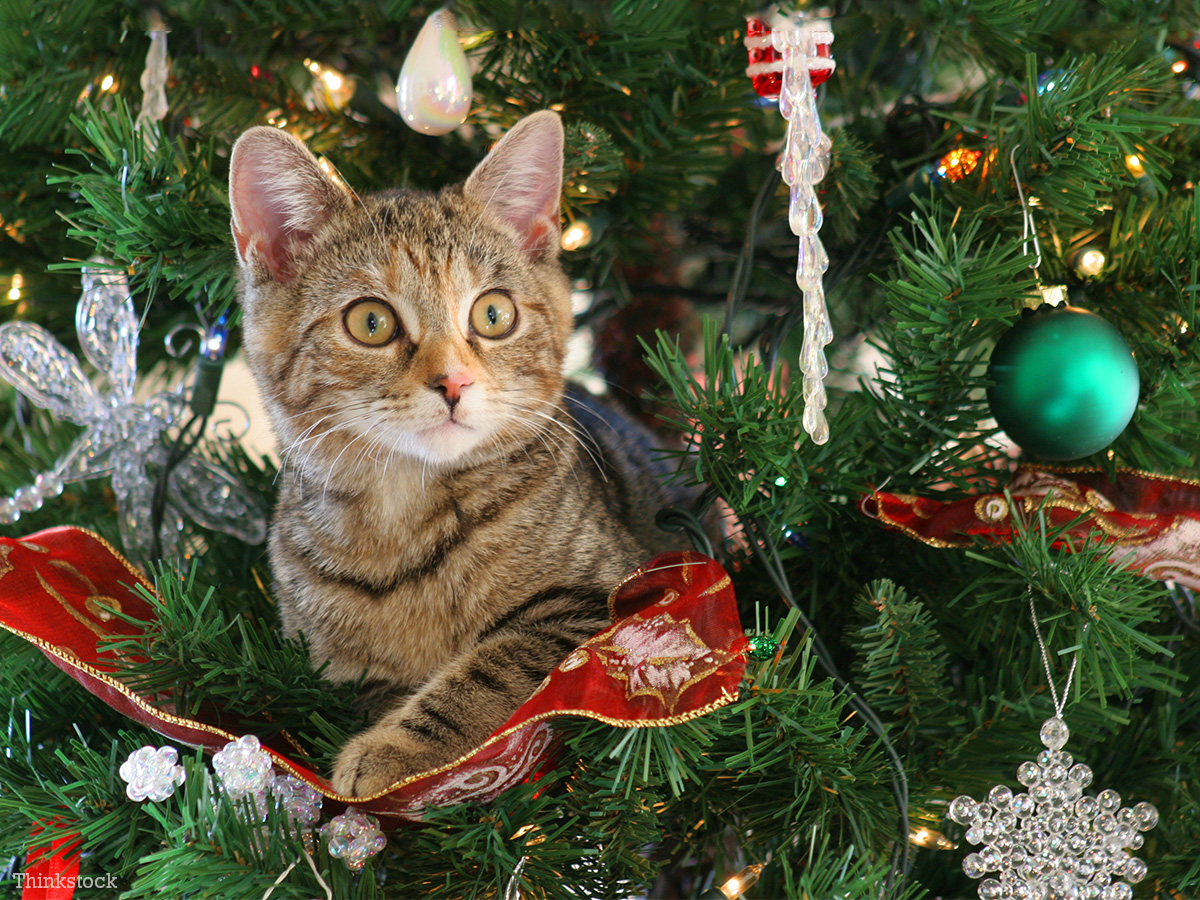 Help! How Do I Keep My Cat Out Of The Christmas Tree?
