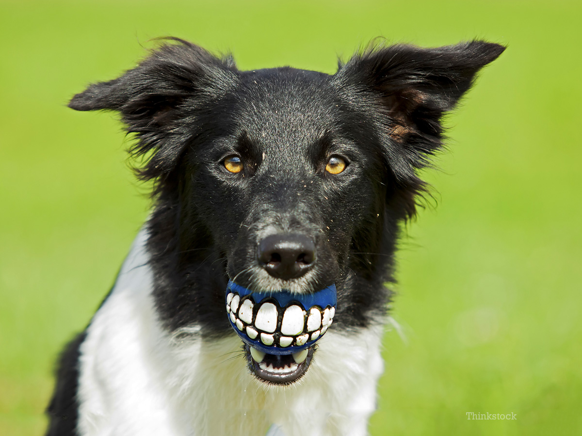 Dr. Ernie's Top 10 Dog Dental Questions... and His Answers!