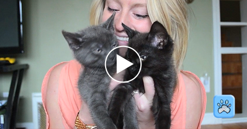 talking cat toy online