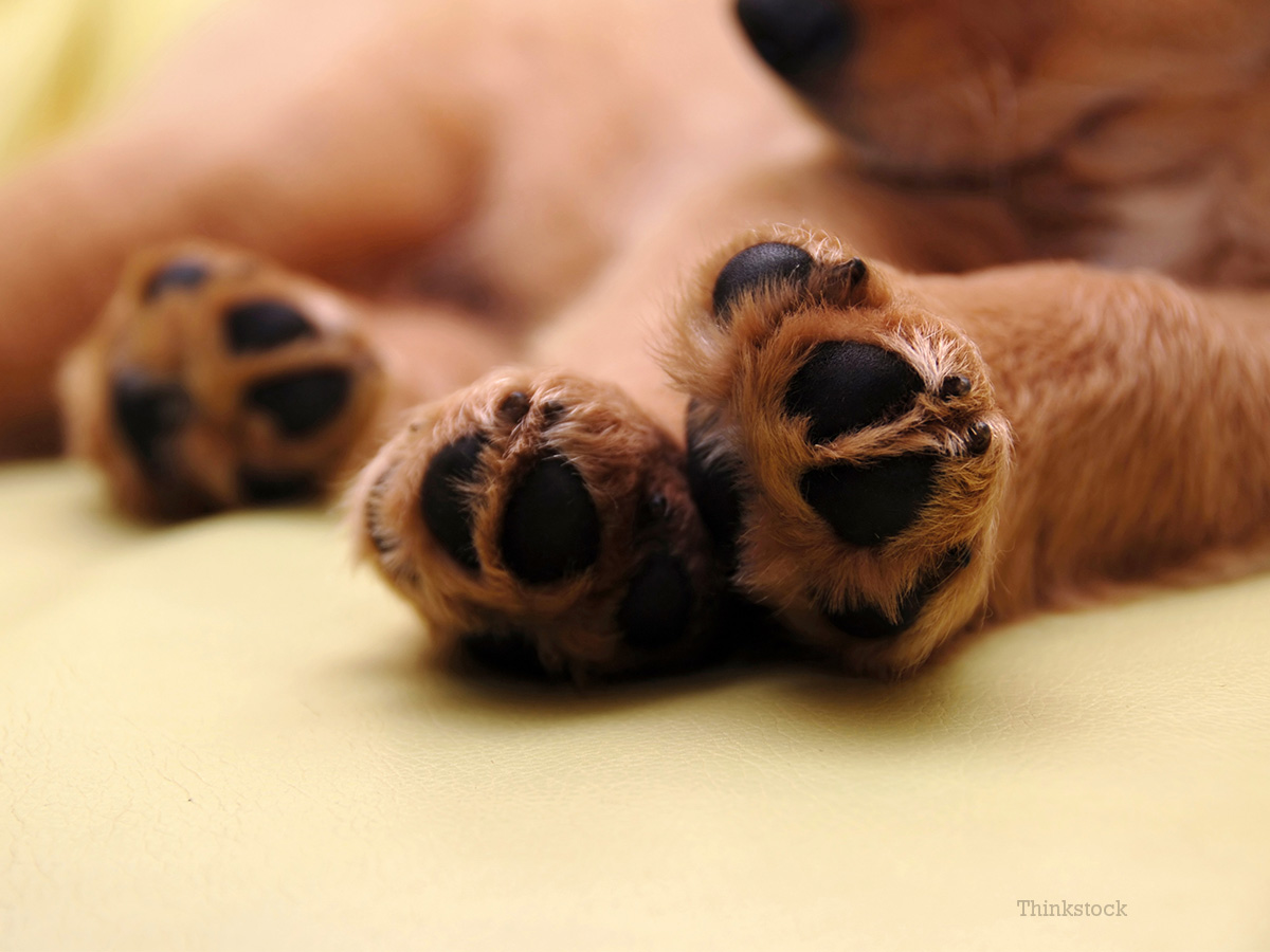 How Do I Trim My New Puppy\'s Nails?