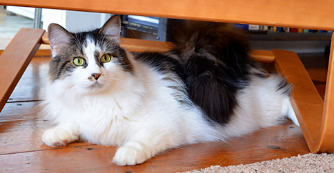 How much is cat litter at cvs