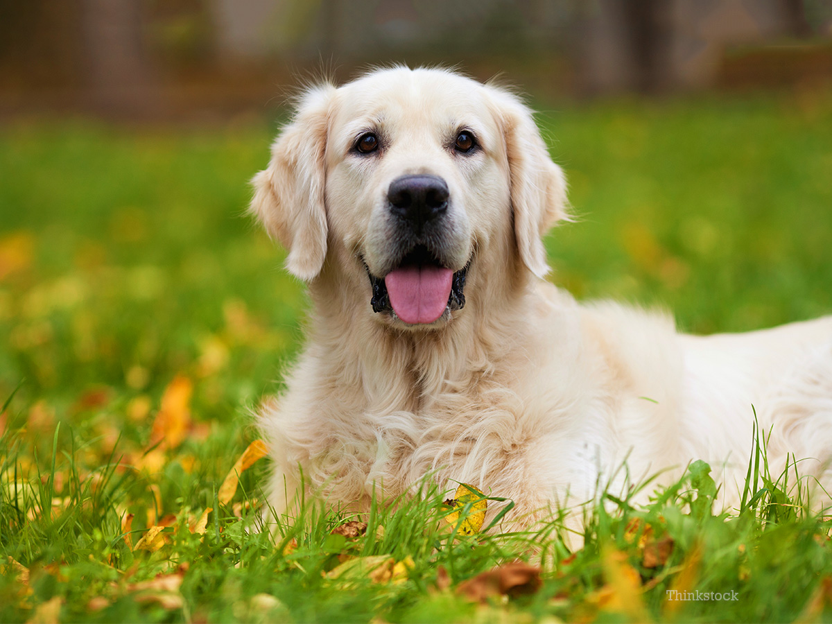 Hypothyroidism And Hyperthyroidism In Dogs