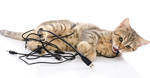 Why Does My Cat Chew Electrical Cords?