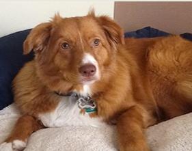 Canine Fibrosarcoma Tumors in Dogs