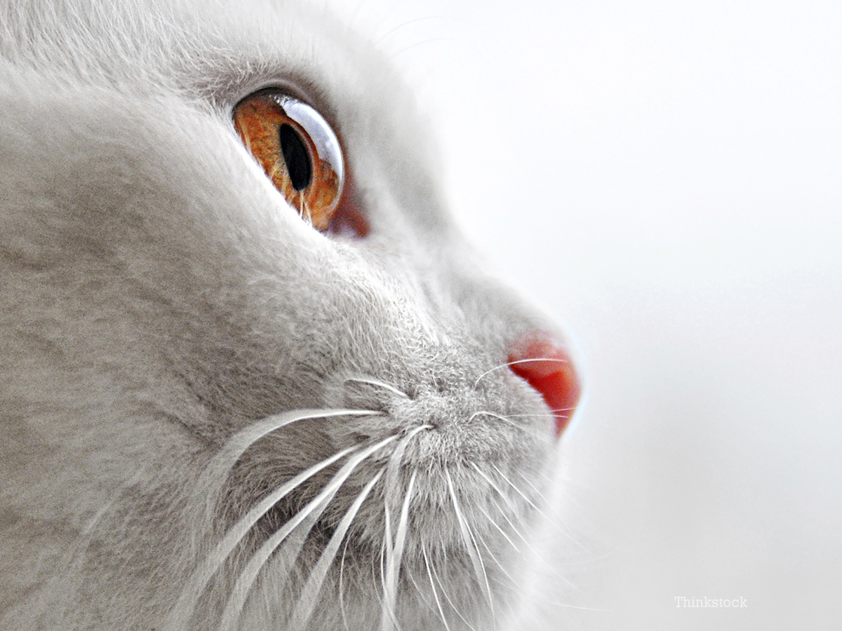 Sudden Onset Blindness In Cats Page 2