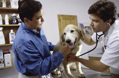dog checkups