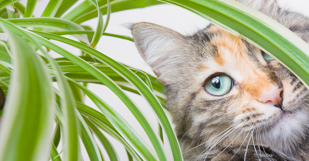 Why Do Cats Eat Plants And Should I Be Worried