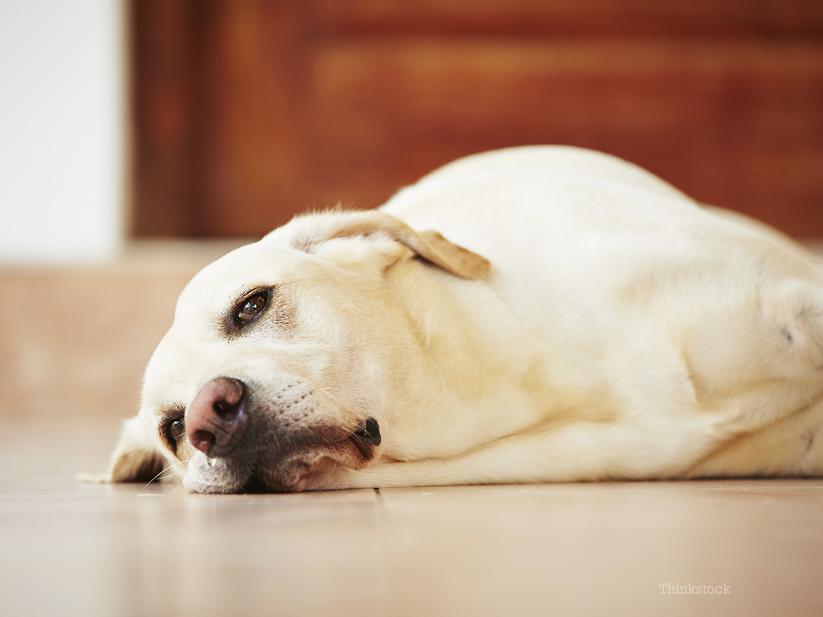 Dog Grieving Cat