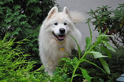 Dog in garden