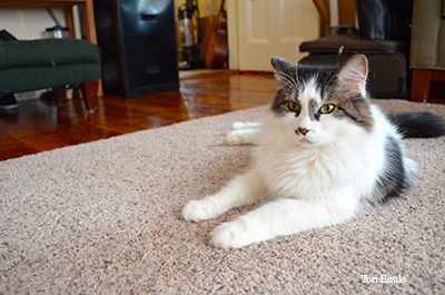 Cat laying on the floor
