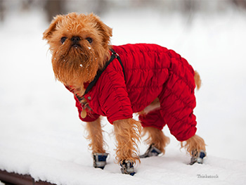Dog in snow jacket and boots