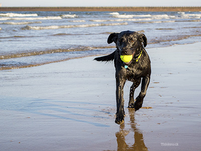 Dog playing on beach