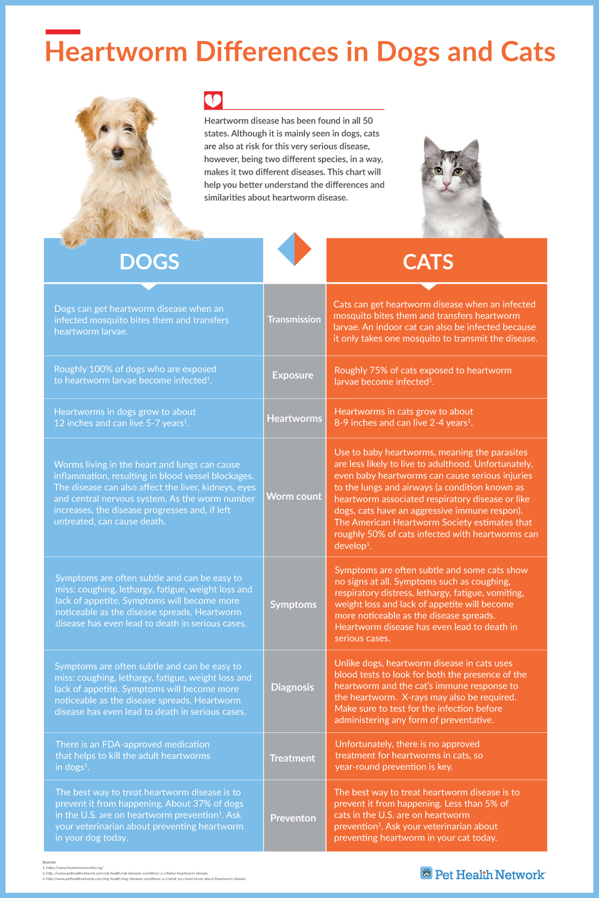 Info Graphics: Heartworm Differences in Dogs and Cats