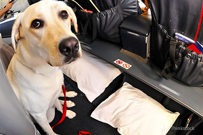 Dr mike paul excited by new airline travel option for pets for Small dogs on airplanes