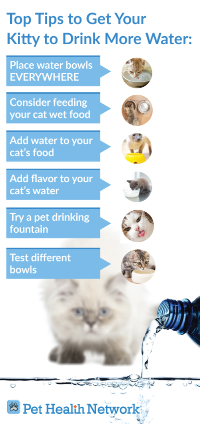 Encourage Kitten To Drink Water