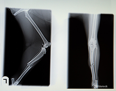 X-ray of a broken canine bone