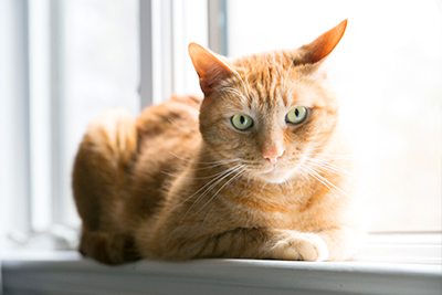 Orange cat on windowsill