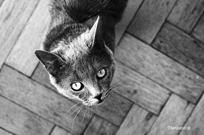 black and white photo of a cat looking up