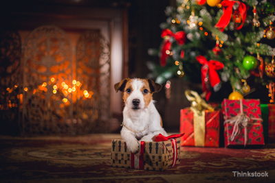 think before you give dogs like this as holiday gifts