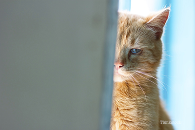 How Can You Reduce Your Cat's Stress at Home?
