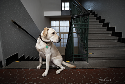 Dog sitting by stairs