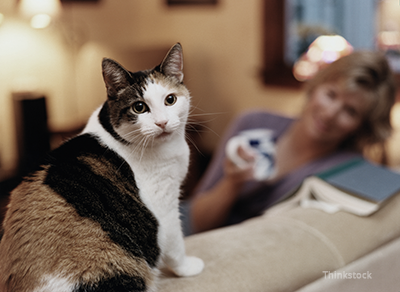 Kidney Disease In Cats What Cat Owners Should Know