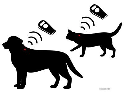 Dog and Cat microchip