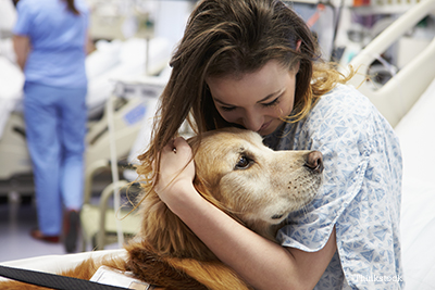 Therapy dog caring for a woman in a hospital