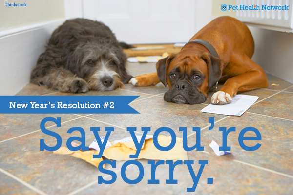 11 New Year's Resolutions From Your Pet