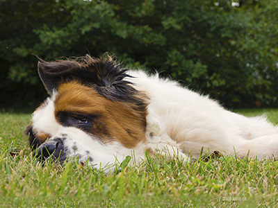 Dog laying down in grass