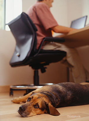 Dog owner searching on a laptop with his dog laying beside him