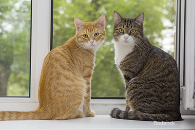 Two cats by the window