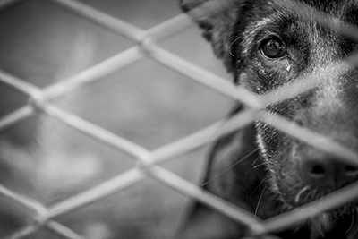 Sad shelter dog behind a fence