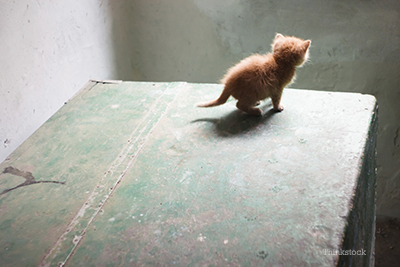 kitten on the edge of a desk