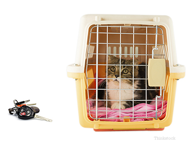 Cat in a crate with a pair of car keys