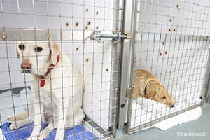 Ticks crawling up the wall of a kennel