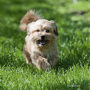 Small dog walking on grass