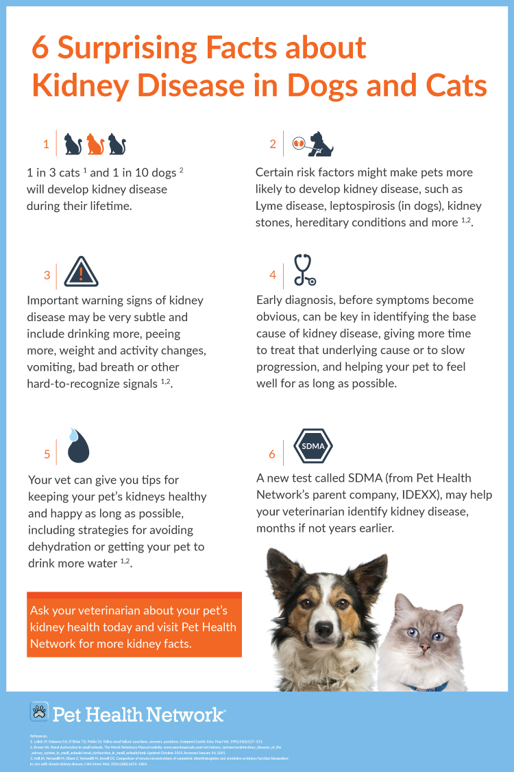Infographic Poster 6 Surprising Facts About Kidney Disease In Cats And Dogs