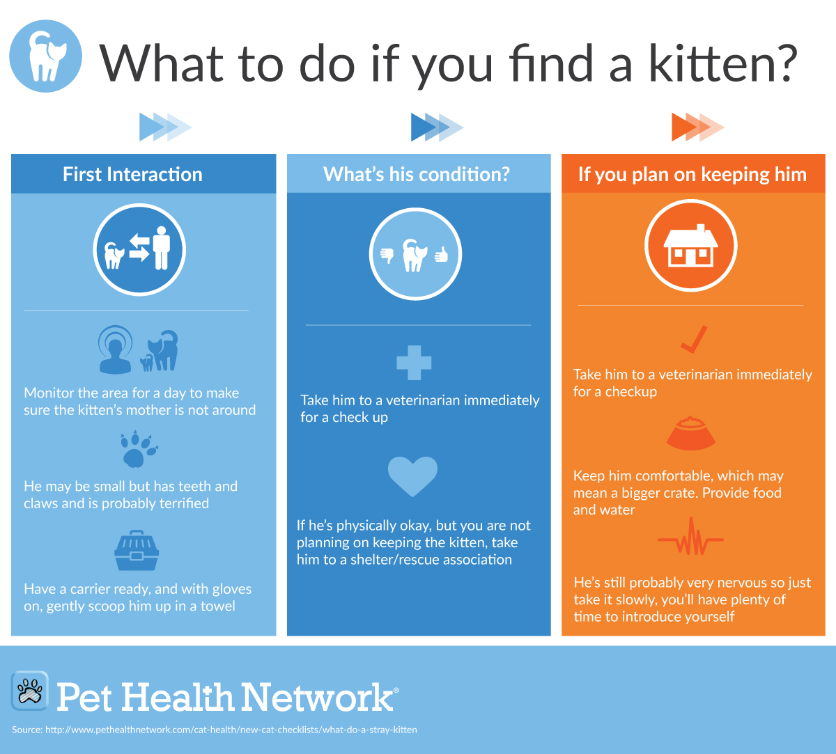 What To Do If You Find A Kitten?
