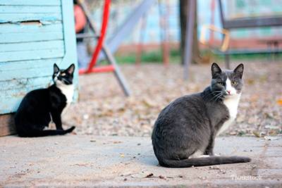 Feral cats sitting around