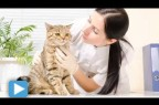 How to Have a Happy Vet Visit with Your Cat