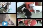 Adopting a Second Cat?