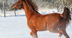 Wintering with Horses