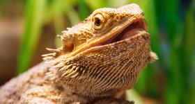 Reptiles 101
