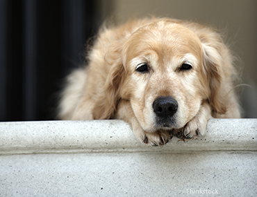 Dog laying down on steps