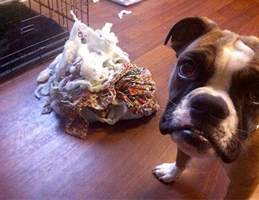 Reasons why Dogs chew, damage and