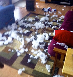 dog ripping up bed